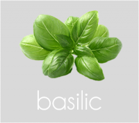 PageLines- basilic.png