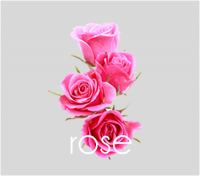 PageLines- rose.png